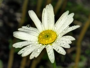Agentur, Blog, Blumen, Blüten, Facebook, G+, Lumix G, Microstock, Stock