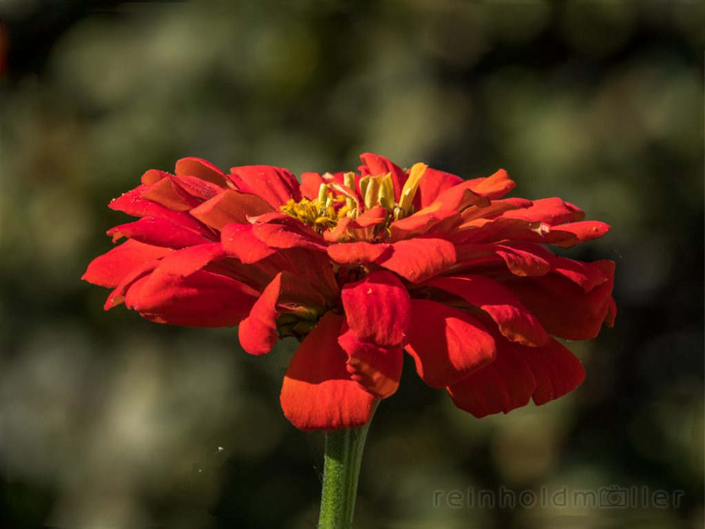 Blumen, Blüten