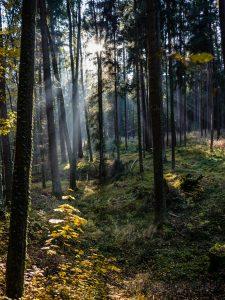 Agentur, Bamberg, Bayern, Blog, Bruderwald, Deutschland, Europa, Facebook, Franken, G+, Herbst, Jahreszeiten, Microstock, Stock, Umgebung, Wald, Wikimedia