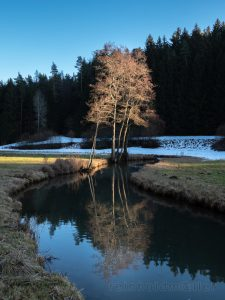 Bayern, Bäume, Deutschland, Europa, Franken, Fränkische Schweiz, Gewächs, Pflanze, Wasser