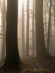 Bamberg, Bayern, Deutschland, Europa, Franken, Herbst, Nebel, Umgebung, Wetter