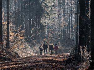 Bruderwald, Wald