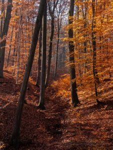 Bamberg, Bayern, Deutschland, Europa, Franken, Herbst, Umgebung