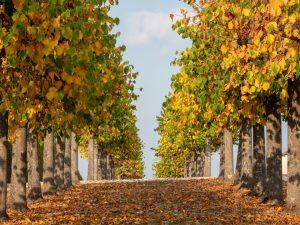 Alleen, Bamberg, Bayern, Deutschland, Europa, Franken, Herbst, Jahreszeiten, Umgebung