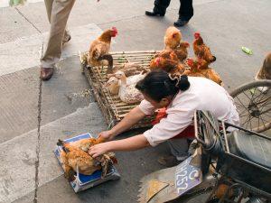 Asien, China, Personen, Shanghai