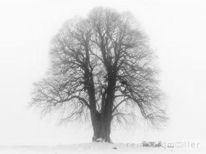 Bayern, Bäume, Deutschland, Europa, Franken, Fränkische Schweiz, Gewächs, Pflanze